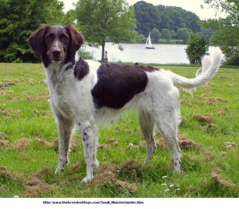 Портал:Собаки/Фотогалерея пород домашних собак